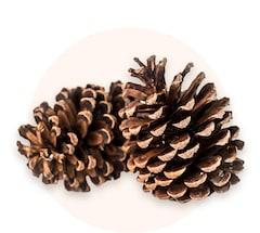 Decorative pinecones