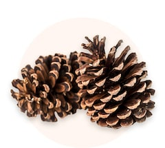 Decorative pinecones
