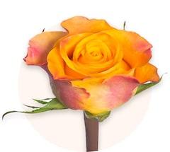 Rosas naranjas