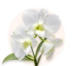 Biała orchidea