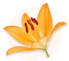 Żółte lilie