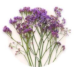 Limonium violet