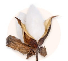 Baumwollblume